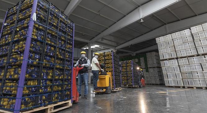 Mersinli Üreticinin Göz Nuru Limonlar İstanbul İçin Yola Çıktı! Mersin Büyükşehir'den Umut Dolu Bir İşbirliği Daha