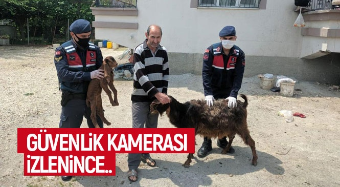 Mersin Tarsus'ta Hırsızların Çaldığı Küçükbaş Hayvanlar, Jandarmanın Olayın Yaşandığı Bölgedeki Güvenlik Kamerasını İzlemesiyle Bulundu