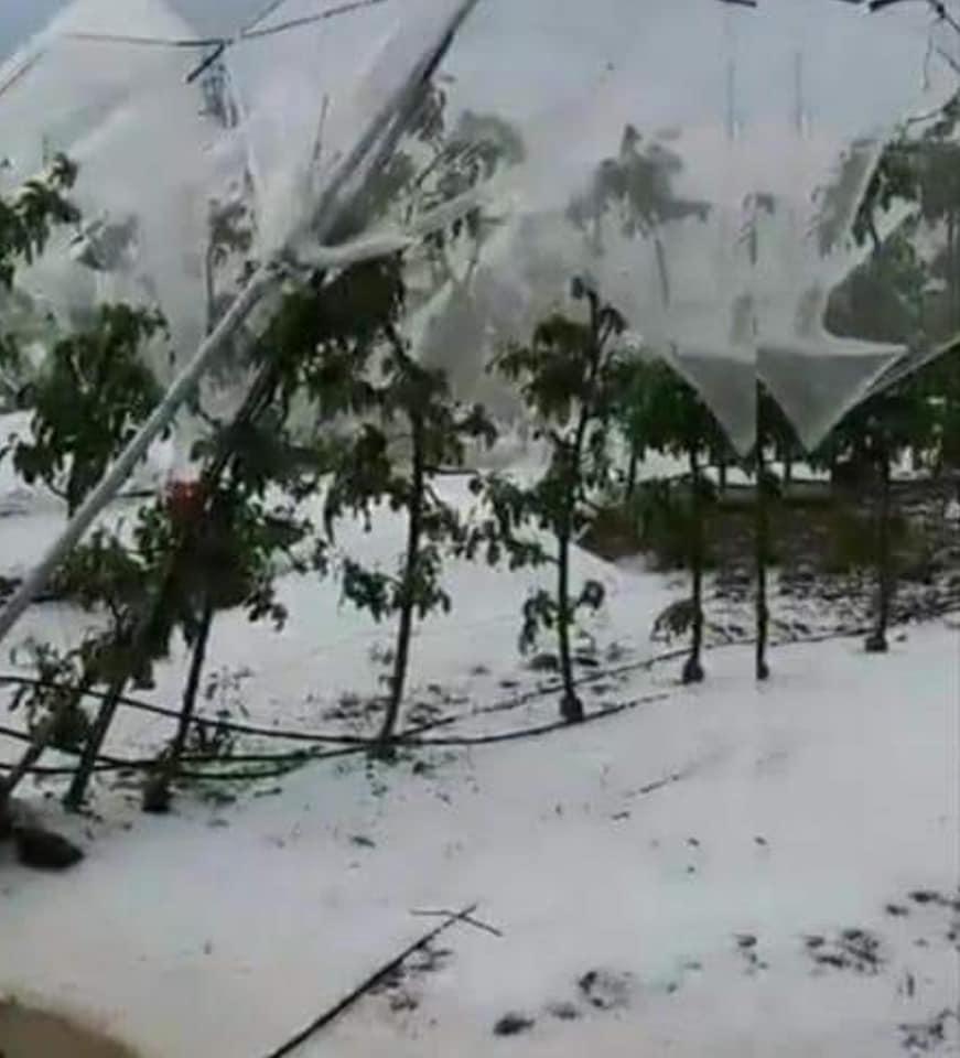 Mersin'in Erdemli ve Silifke İlçelerinde Dolu Yağışı Etkili Oldu