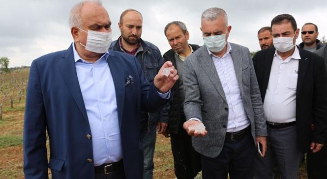 Erdemli'de Yaşanan Dolu Afeti Sonrası Başkan Tollu'dan Çiftçilere Ziyaret