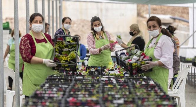 Mersinden Kadın Kooperatifi Öncülüğünde Kadınlar, 8 Bin Sukulent Hazırladı