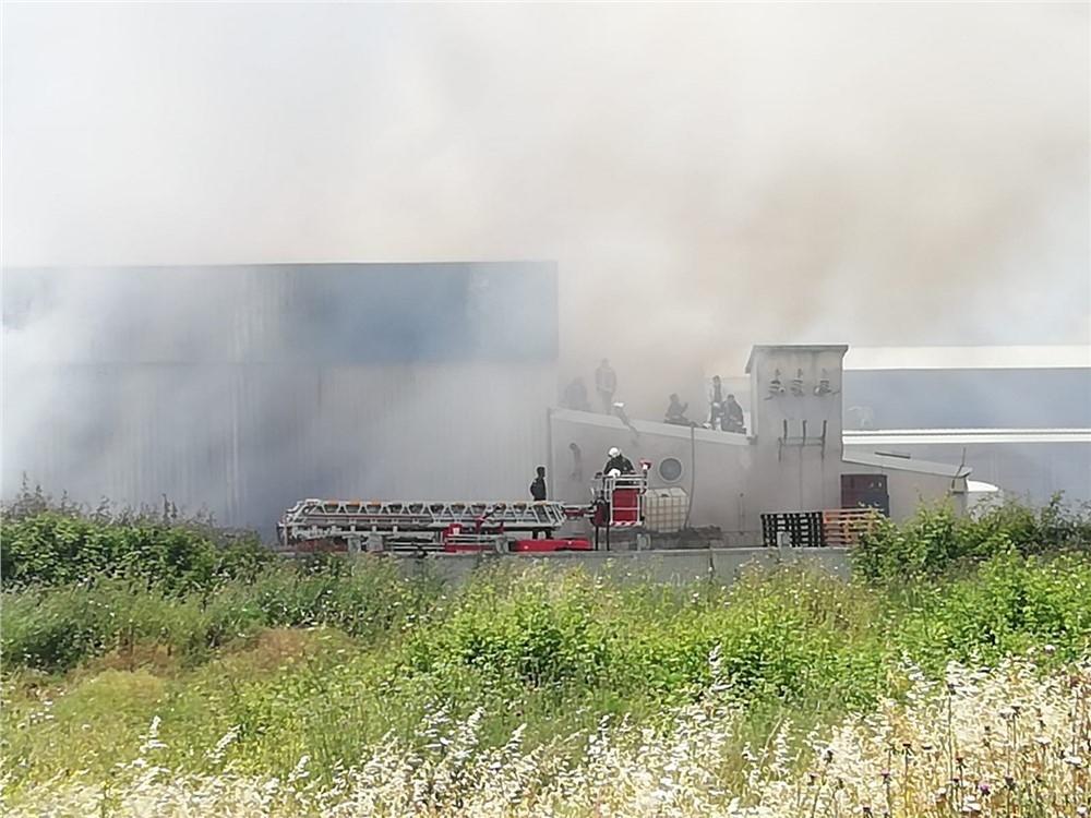 Mersin Tece'deki Narenciye Fabrikasında Yangın