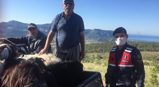 Mersin Silifke'de Üreticiye Ait Kayıp Küçükbaş Hayvanlar Jandarma Tarafından Bulunarak Sahibine Teslim Edildi