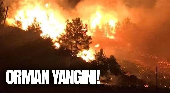 Mersin Aydıncık Karatepe Mevki ve Bozyazı Karaisalı'da Orman Yangını