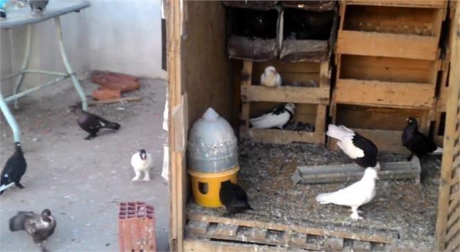 Jandarma Tarsus'ta Meydana Gelen Faili Meçhul Kümes Hayvanı Hırsızlığı Olayını Aydınlattı