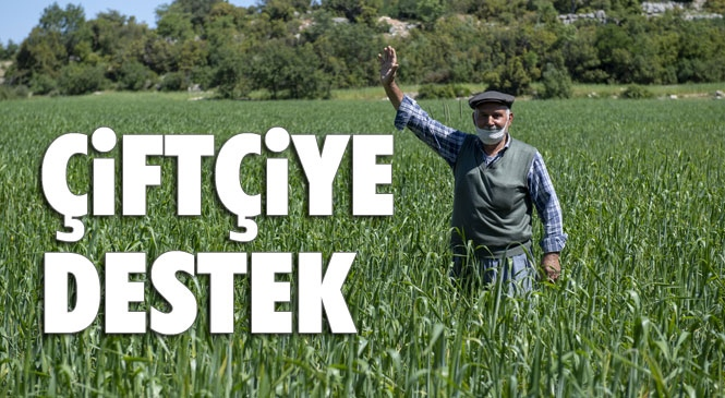 Mersin'de 13 Çiftçi, 65 Dekarlık Alanda Yöreye Özgü Sarı Buğday Üretiyor! Özgün Sarı Buğday Tohumu Gelecek Nesillere Aktarılacak