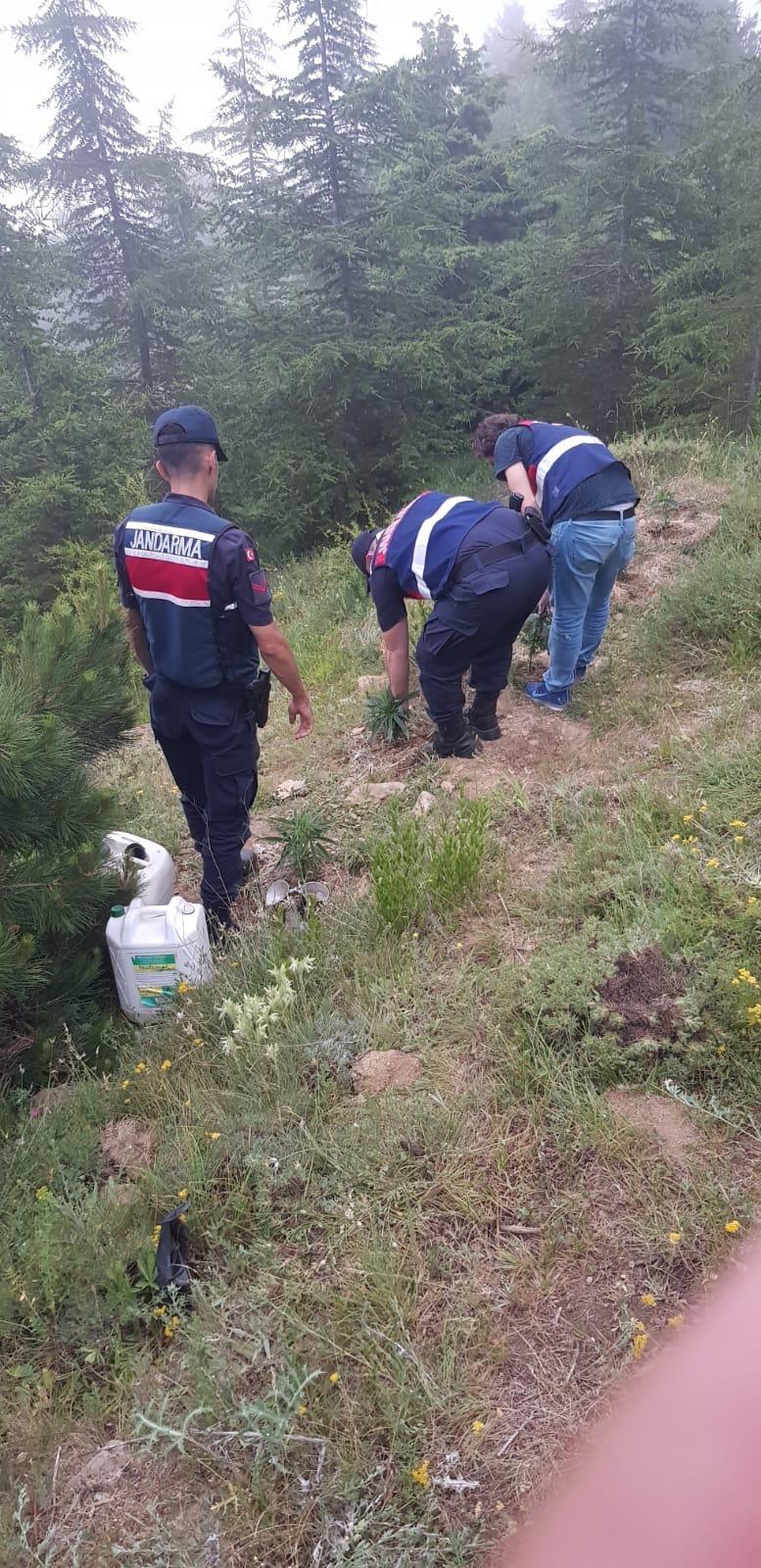 Traktörü Bırakıp Kaçtı! 2 Bin 50 Kök Yakalandı 3 Kişi Tutuklandı! Mersin Mezitli'de Yasa Dışı Ekilmiş 1.050 Kök Kenevir Bitkisi Ele Geçirildi
