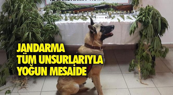 Mersin Tarsus'ta Uyuşturucu Madde İmal ve Ticareti Maksadıyla Yasadışı Kenevir Bitkisi Eken Şahıslara Yönelik Operasyon: 1 Tutuklama