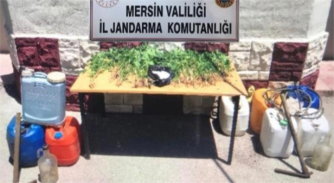 Mersin Mezitli'de Ormanlık Alana Ekilmiş Hint Keneviri Ele Geçirildi