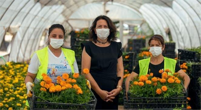 Mersin Büyükşehir, Çiçek İçin 1 Yıllık Alım Garantisi Verdi, Kooperatif Üyesi Kadınlar 800 Bin Çiçek Daha Yetiştirdi