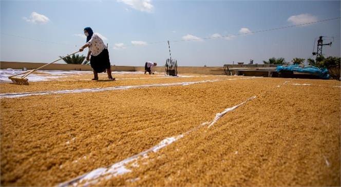 Atalık Sarı Buğday Kadınların Emeğiyle Altına Dönüşüyor