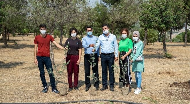 Üniversite Yolunda Mersin'de Barış Ağaçları Yeşerecek! Üniversiteyi Kazanan Kurs Merkezi Öğrencileri Zeytin Fidanı Dikti