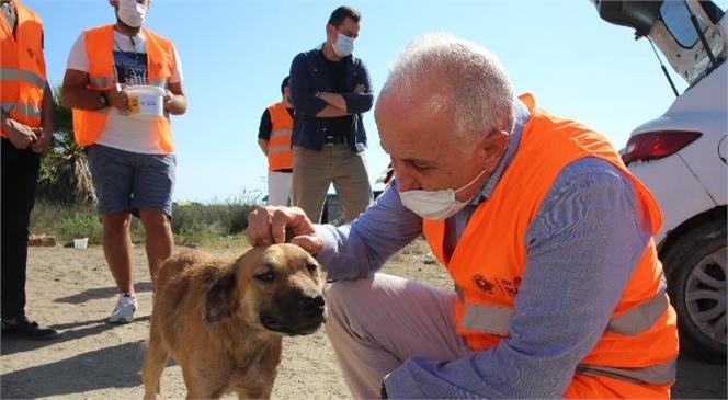 Akdeniz Belediye Başkanı Gültak, Sokak Hayvanlarına Mama ve Su Dağıttı