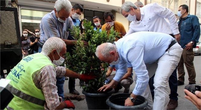 Akdeniz Belediye Ekipleri Tarafından Bulunduğu Yerden İndirilip Fidanlıkta Bakıma Alındı