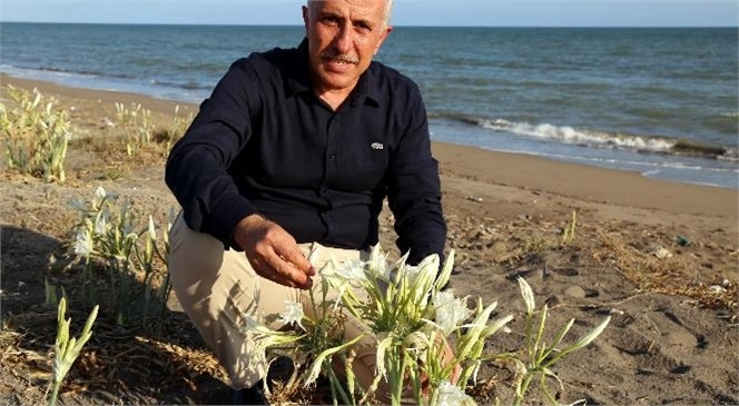 Kum Zambakları Akdeniz Belediyesi'nin Koruması Altında