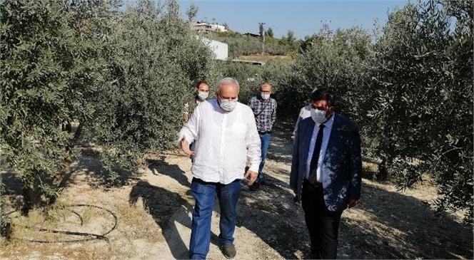 Tarsus Sarıulak Zeytin Bahçesi Denetimi Yapıldı