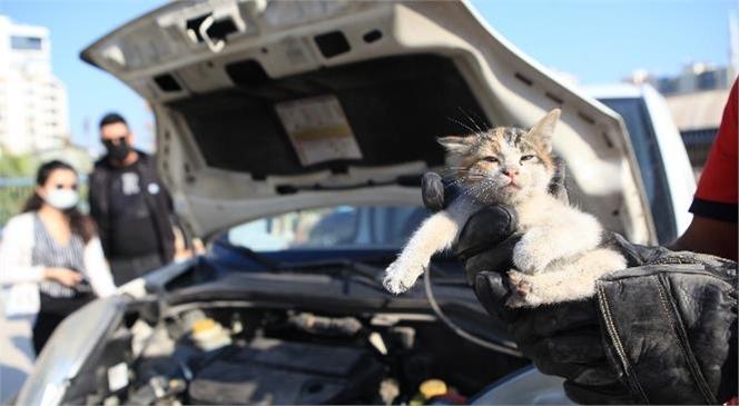 Isınmak İçin Araba Motoruna Giren Can Dostları İtfaiye Ekipleri Kurtarıyor