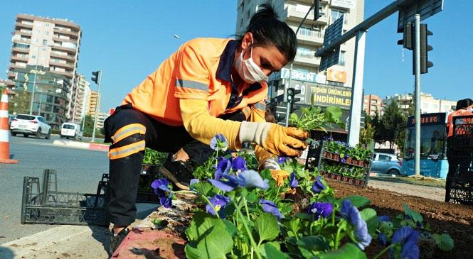 Mersin, Kışın da RengÂrenk Bir Çiçek Bahçesi! Büyükşehir, Kış Ayları İçin 800 Bin Çiçeği Toprakla Buluşturuyor