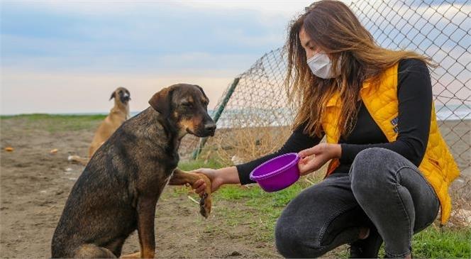 """""""Boşalan Sahillerde Sokak Hayvanlarına Umut Oluyorlar"""""""