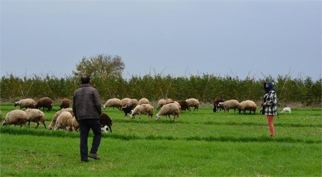 Meslektaşları Çiftliklerini Satarken, Onlar Büyükşehir'in Desteğiyle Ayakta Kalıyor