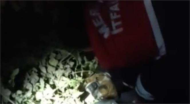 Mersin Tarsus'ta Sulama Kanalına Düşen Köpeği İtfaiye Ekipleri Kurtardı