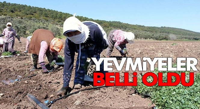 Mersin Tarsus'ta Günlük Ödenecek Olan Yevmiye 100 TL Olarak Duyuruldu