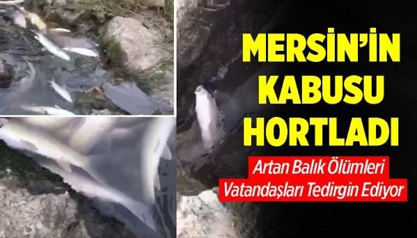 Mersin'in Tarsus İlçesinde Berdan Nehri'nin Denize Döküldüğü Noktada Çok Sayıda Ölü Balık Kıyıya Vurdu