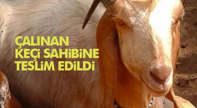 Tarsus'ta Küçükbaş Hayvan Çalınması Olayı Aydınlatıldı