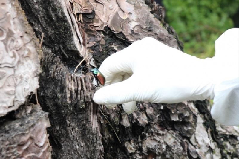 650 Bin Yırtıcı Böcek Ormanları Koruyacak