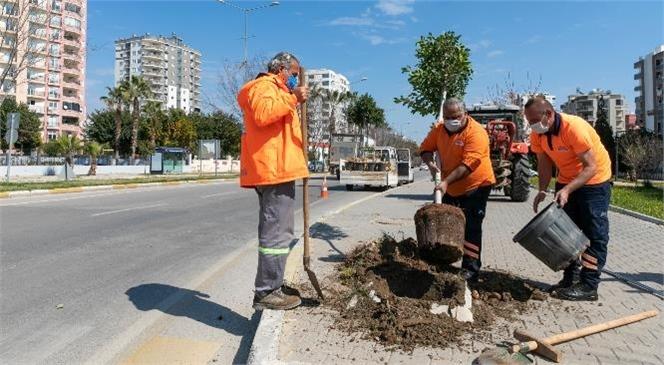 Mersin Büyükşehir, Kaldırımları Hem Yeniliyor Hem Bitkilendiriyor