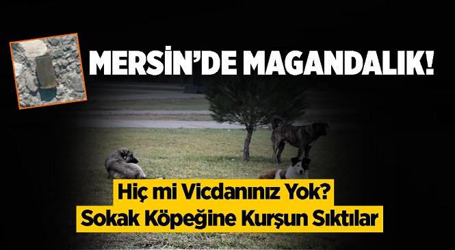Mersin'in Yenişehir İlçesi Gökçebelen Mahallesinde Sokak Köpeğine Silahla Ateş Edildiği İddiası Tepki Çekti