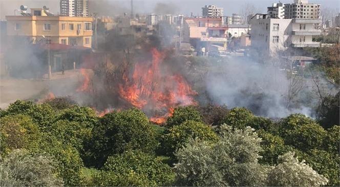 Çesmeli'de Korkutan Yangın