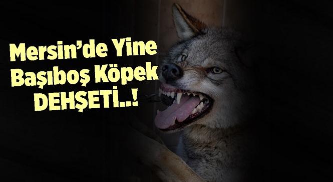 Tarsus'ta Başıboş Köpekler Dehşet Saçtı, Ali Çömük'e Ait 3 Koyun Telef Oldu