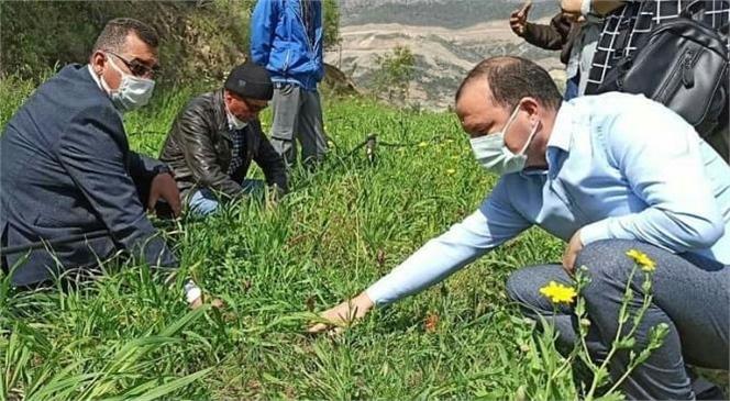 Mersin'de Salep Üretimi İçin Çalışmalar Başladı