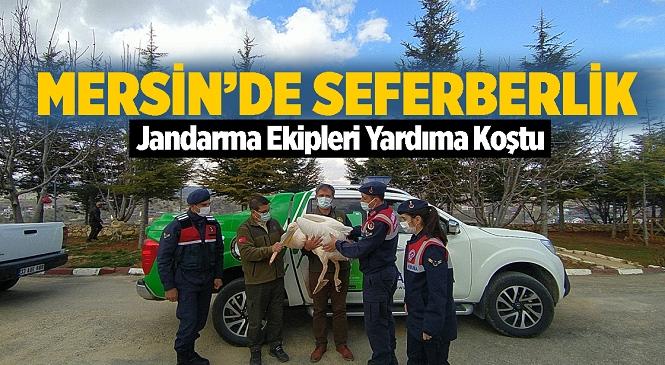 Mersin'de Devriye Gezen Jandarma Ekiplerinin Bulduğu Yaralı Pelikan Tedavi Altına Alındı