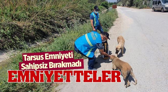 Mersin'de Kısıtlama Günlerinde Alkış Alan Davranış, İlçe Emniyet Müdürlüğü Ekipleri Sokak Hayvanlarını Sahipsiz Bırakmadı
