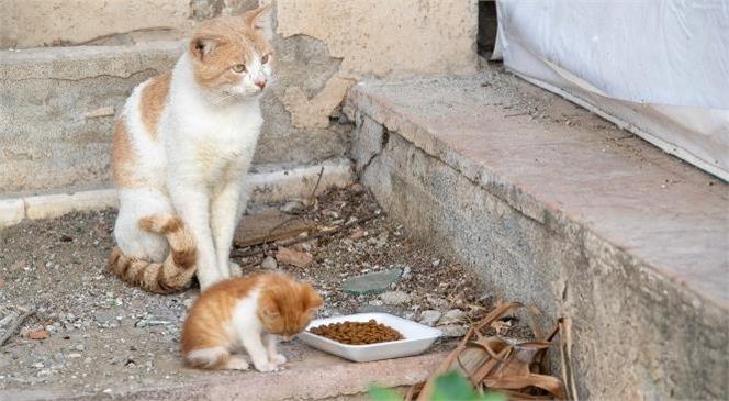 Tam Kapanma Sürecinde de Sokak Hayvanları Büyükşehir'e Emanet