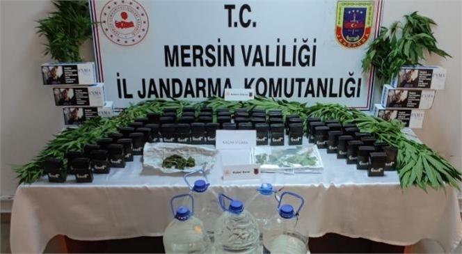 Tarsus'ta Bir Evin Çatı Katında 50 Kök Kenevir Bitkisi Ele Geçirildi