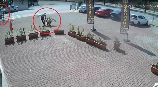 Mersin'de Bir İş Yerine Ait Ağaç Ekili Saksıyı Çalan Şüpheli Güvenlik Kamerasına Yakalandı
