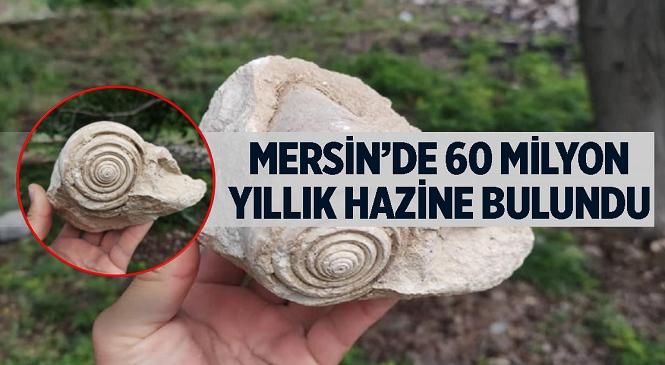 Mersin'de 60 Milyon Yıl Öncesine Ait Olduğu Tahmin Edilen Fosil Bulundu