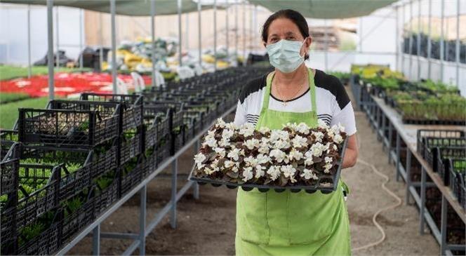 Kooperatif Bünyesindeki Kadınlar 2 Milyon Çiçek Daha Yetiştirdi