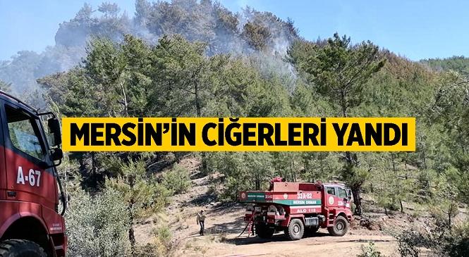 Mersin'in Bozyazı İlçesinde Çıkan Yangında Kızılçam Ormanları Zarar Gördü