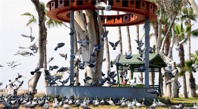 Sahildeki Kuşlar İçin 48 Odalı Kuş Evi! Mersin Büyükşehir'den Kuşlar İçin Yuva Konforunda Kuş Evi