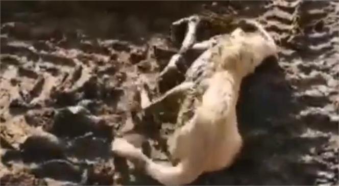 Mersin Mut'ta Hayvan Gübresinde Mahsur Kalan Köpeği İtfaiye Kurtardı