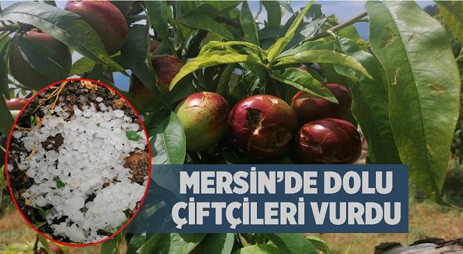Mersin'in Tarsus ve Toroslar İlçesinin Yüksek Kesimlerini Dolu Vurdu! Hasada Hazırlanan Çiftçinin Zararı Büyük