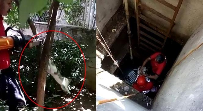 Mersin Tarsus'ta Kuyuya Düşen ve Ağaca Sıkışan Kediler İçin İtfaiyeden Kurtarma Operasyonları