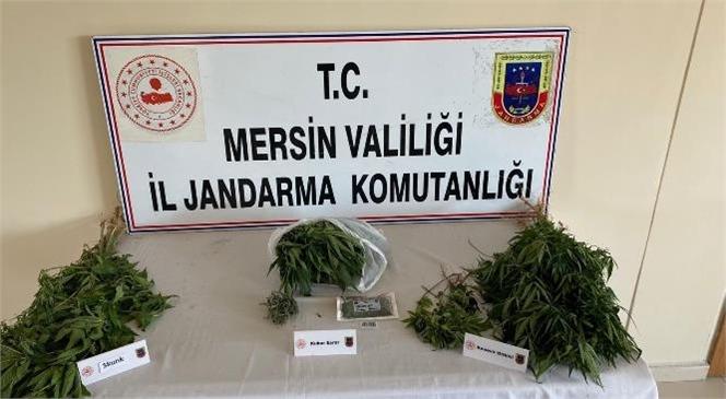 Mersin Tarsus'ta Yasa Dışı Kenevir Operasyonu Düzenlendi