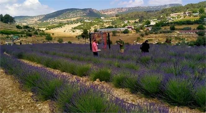 Mersin'de Lavanta Bahçeleri Hasada Hazırlanırken Aynı Zamanda Ziyaretçilerini Bekliyor