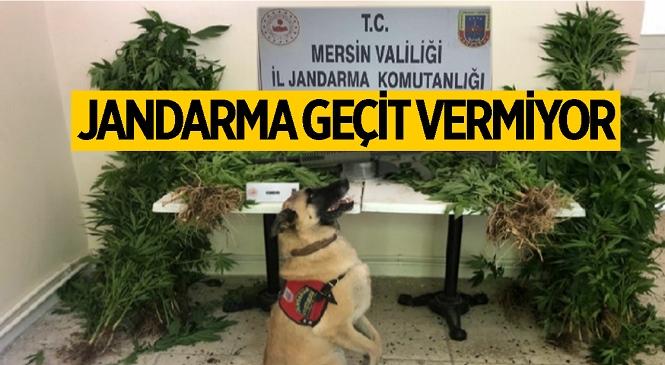 Mersin'de Uyuşturucu Operasyonu! 2 Kişi Gözaltına Alındı, 1'i Tutuklandı