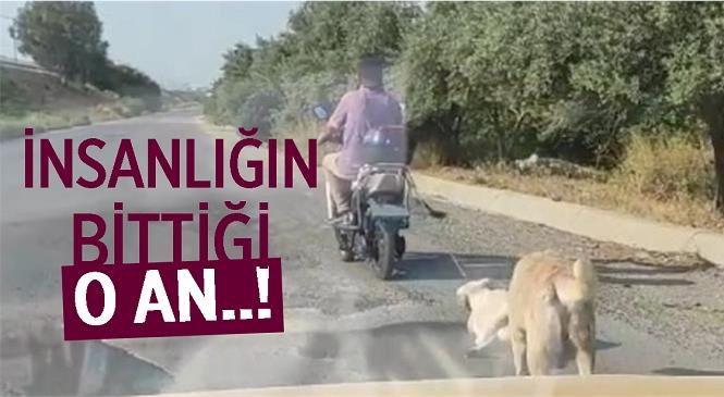 Mersin'de Elektrikli Bisiklete Bağlanıp Sürüklenen Köpek Koruma Altına Alındı